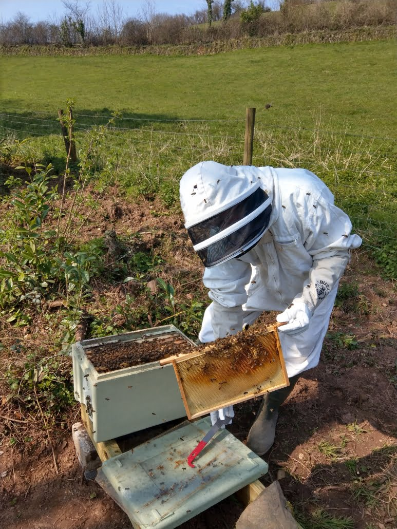 Beekeeper with open bee hive at a Stone's Honey apiary