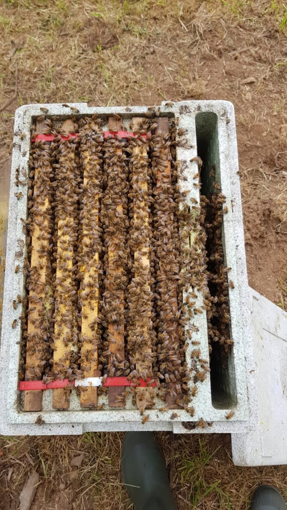Devon bee hive full of bees